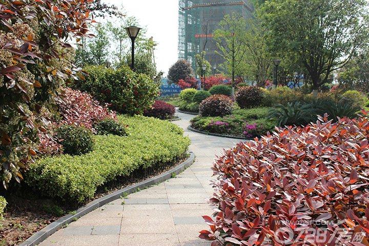 绿植环绕的花园