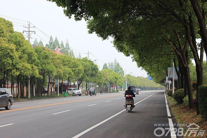 绿树成荫的柏油路